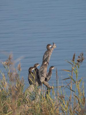 Bild: Vögel am Wasser - Foto 1