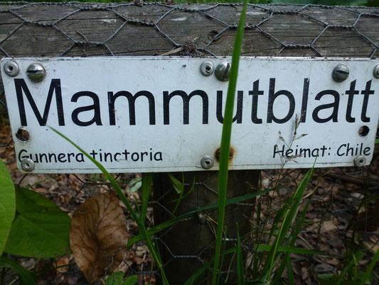 Mammutblatt