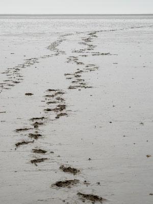 Bild: Unsere Fußstapfen im Watt von Friedrichskook
