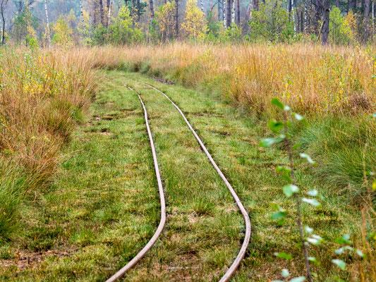 Bild: Die Gleise der Moorbahn