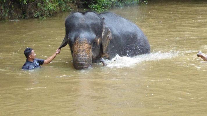 Bild: Ein Elefant wird von einem Wärter gewaschen.