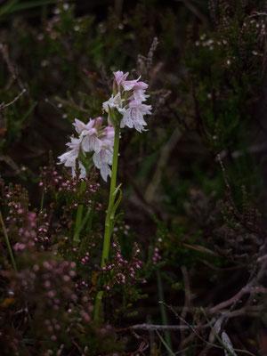 Bild: Orchidee