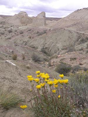 Bild: Blumen in der Wildnis