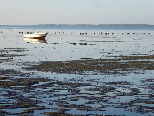 Bild: Impressionen vom Strand bei Pepelow - Foto 1