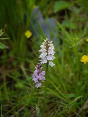 Bild: Orchideen