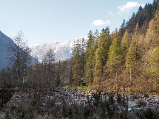 Bild: Unser Blick auf den Wald mit den Bergen im Hintergrund
