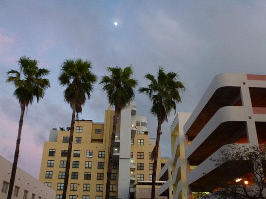 Bild: 4 Palmen, Hochhäuser und der Mond