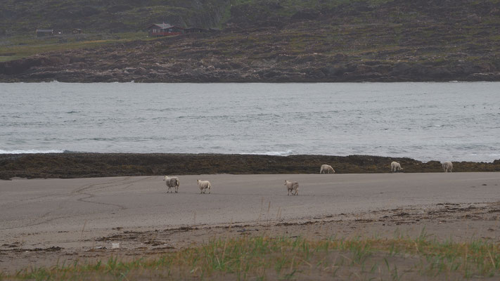 Bild: Rückfahrt nach Vardø