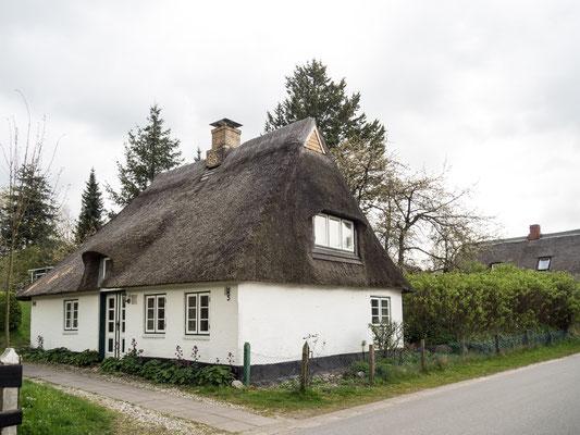 Bild: Alte Reetdachhäuser in Missunde an der Schlei in Schleswig Holstein - Foto 1