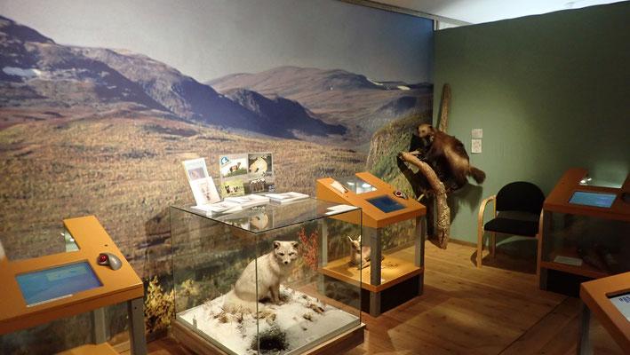 Bild: Das Museum von innen