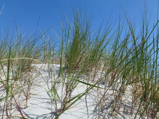 Bild: Stranddüne