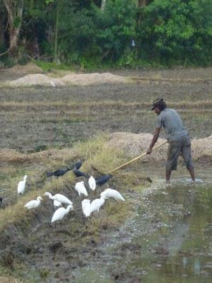 Bauer auf dem Acker