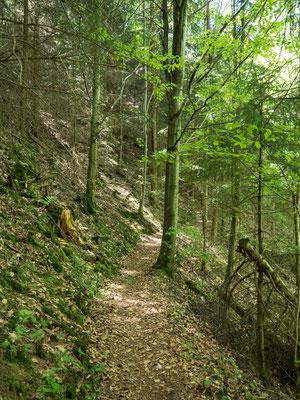 Bild: Foto von der Panoramaroute bei ilfeld im Südharz - Foto 4