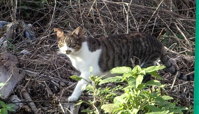 Bild: Posillipo Katze mit Schnurrbart