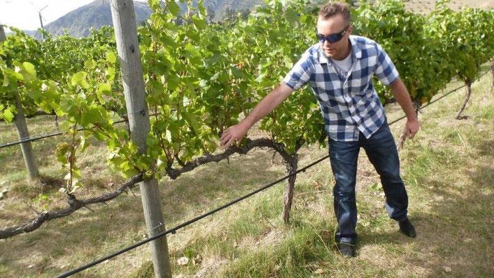Bild: Winery-Tour im Otago-Valley