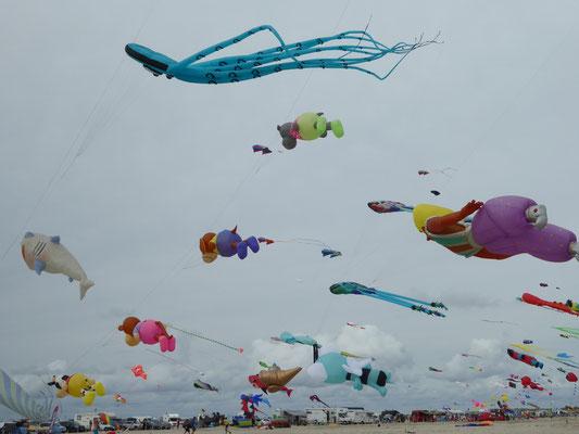 Bild: Drachen Festival in St. Peter-Ording - Foto 2