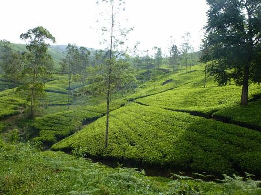 Bild: Reisfelder