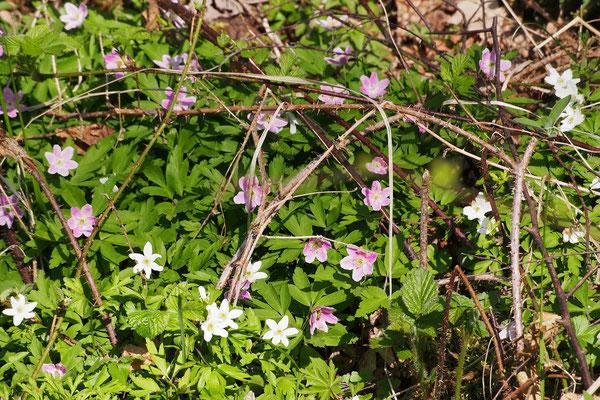 Bild: Blumen am Wegesrand