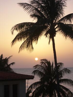Palmen beim Sonnenuntergang