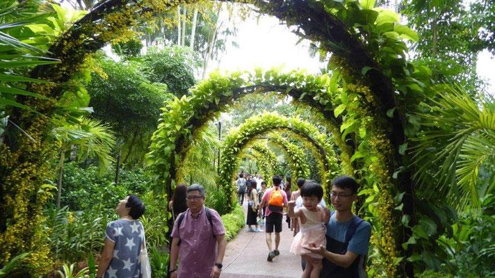 Bild: Laubengang im National Orchid Garden in Singapur