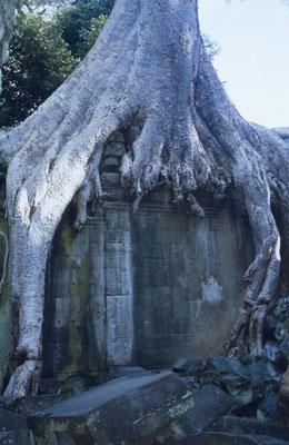 Bild: Ankor Wat - Foto 4