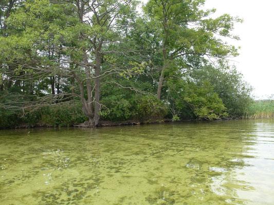 Bild: Ufer mit klarem Wasser