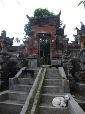 Bild: Hund auf den Stufen einer Tempelanlage