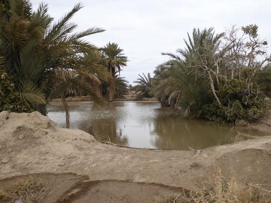 Bild: Wasser im Wüstenboden bei Rissani in Marokko