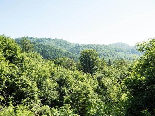 Bild: Wanderung durch das alte Vulkangebiet im Südharz - Foto 3