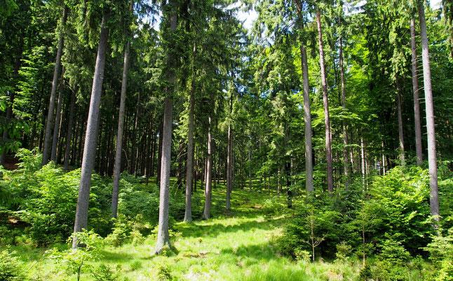 Bild: Wald