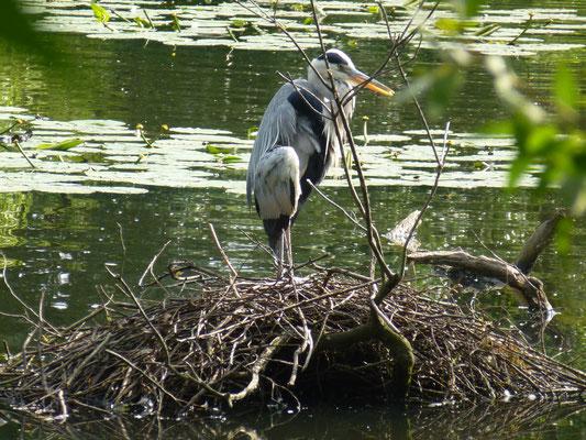 Storch auf seinem Nest
