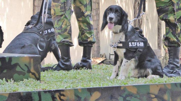 Bild: Militärparade zur Unabhängigkeitsfeier in Colombo