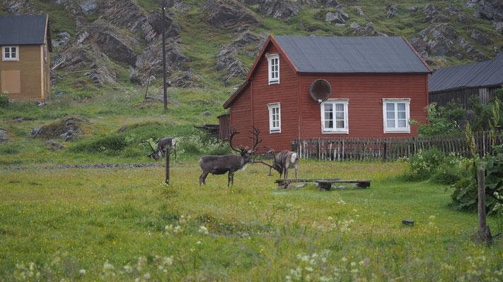 Bild: Hamningberg