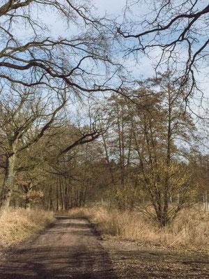 Bild: Unser Wanderweg durch das Naturschutzgebiet Talhänge bei Göttin im Herzogtum Lauenburg
