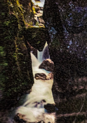 Schlucht von Tolmin Klammen - Foto 1