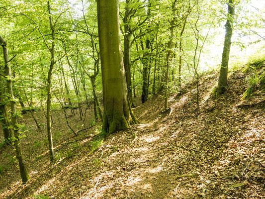 Foto der Wanderung durch den Laubwald