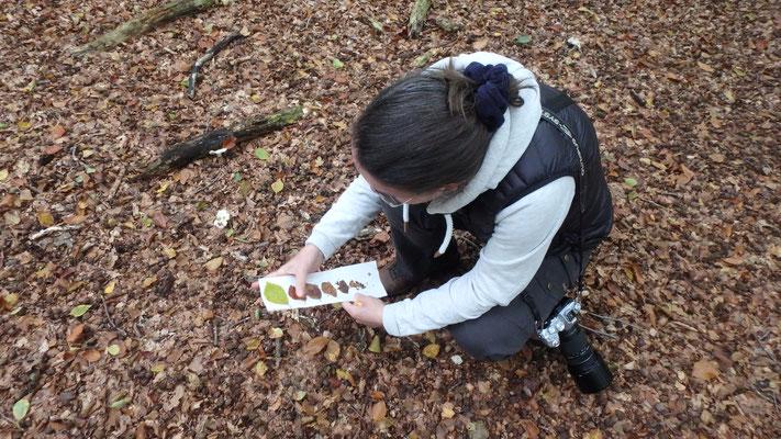 Wir sammeln Blätter