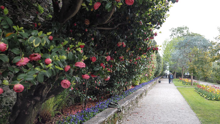 Bild: Weg durch den Garten