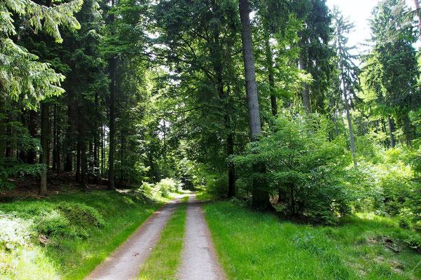 Bild: Waldweg