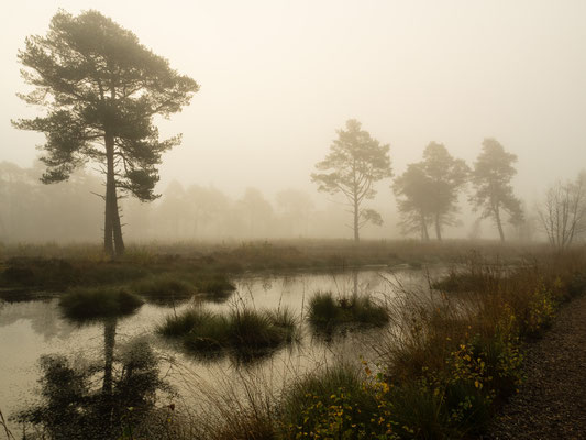 Bild: Tister Bauernmoor - Foto 3