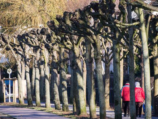 Bild: Wanderweg in Bergedorf