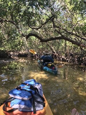 Kayakfahrt durch die Mangroven