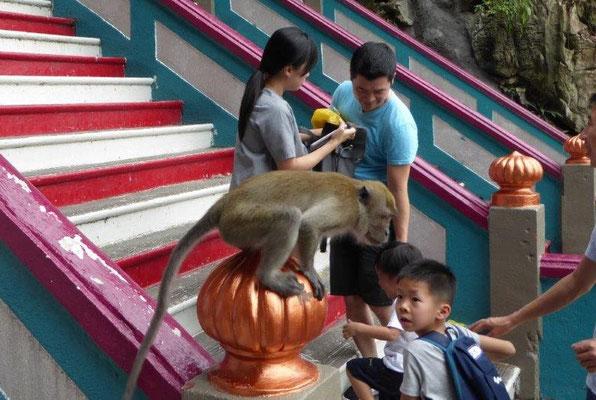 Bild: Affen am Treppenaufgang des Tempels klauen den Besuchern Getränkeflaschen.
