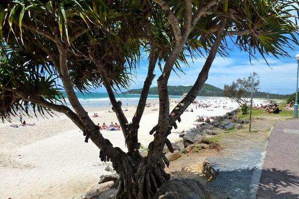 Bild: Blick zum Tallow Beach