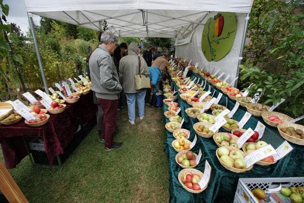 Sortenvielfalt bei Äpfel und Birnen aus dem Rheinland