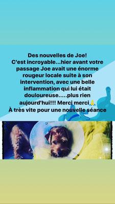 Magnetiseur-Toulouse-centre-healer-fluide-revitalisant-sur-animaux-chat-chien-cheval