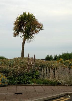 Zum Urlaub nach Cornwall - Llandudno Palmen und Meer - Zebraspider DIY Anti-Fashion Blog