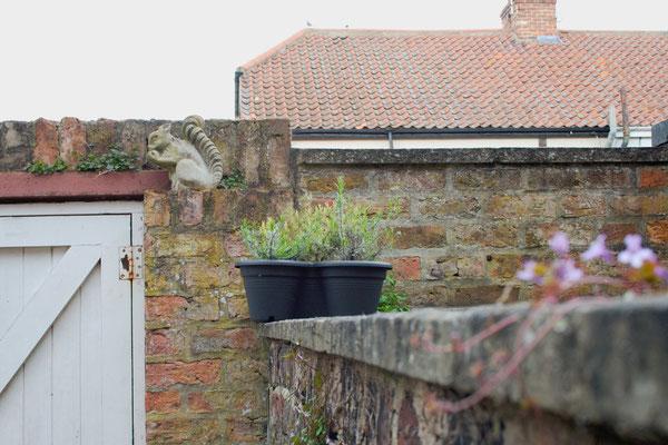 Mein englischer Garten - Lavendel - Zebraspider DIY Anti-Fashion Blog
