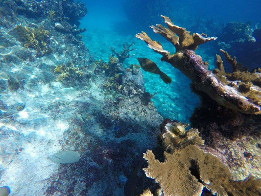Snorkel en Playa Coral