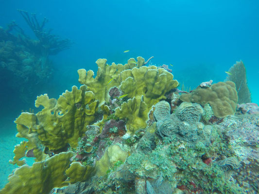 Inmersiones en Playa Coral